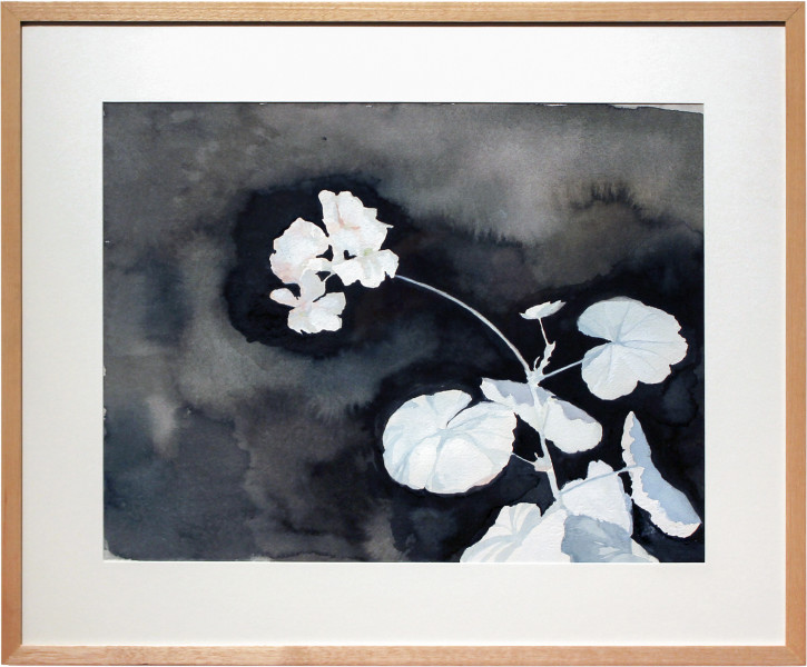 Glenn Sorensen Geranium, 2011; watercolour on paper; 40.5 x 49.5 cm; enquire