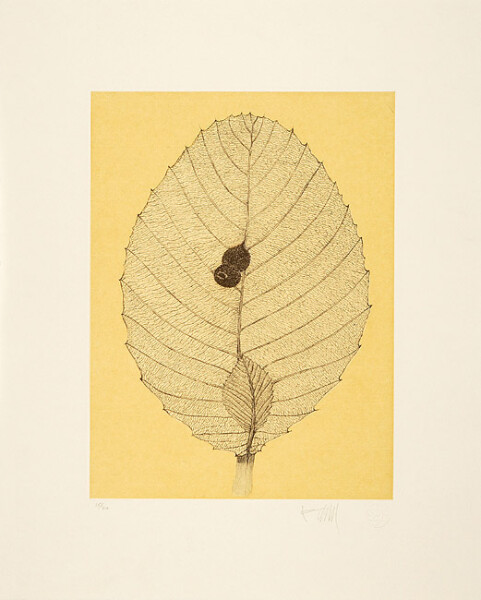 Fiona Hall Shrubby Dilenia, 2006; from the series Insectivorous; etching; 48 x 39.5 cm; Edition of 40; enquire