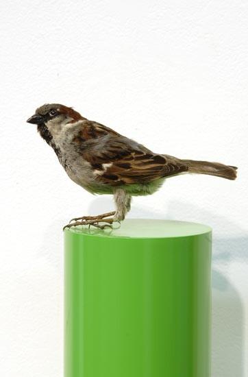 Michael Parekowhai John Taffin, 2004; sparrow, two pot paint, and aluminium; 78 x 13 x 10 cm; enquire