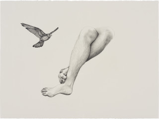 Patricia Piccinini Inseparable (Nankeen Kestrel), 2020; graphite on paper; 57 x 76 cm; 72.5 x 91 cm (framed); enquire