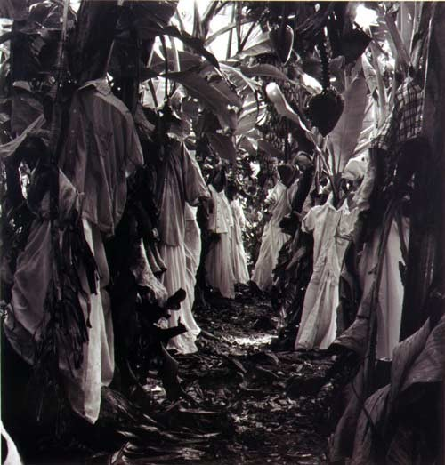 Simryn Gill #2, 1999; from the series Rampant; black and white prints on fibre paper, selenium toned; 22.5 x 25.5 cm; Edition of 10; Edition of 9 + AP 2; enquire