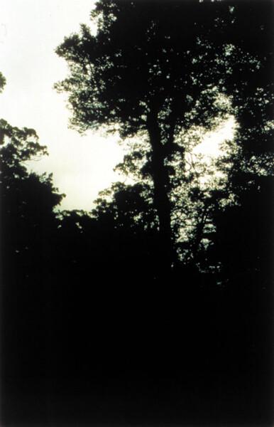 Bill Henson Untitled #109, 1998; CL SH 60 N34; Type C photograph; 104 x 154 cm; 127 x 180 cm (paper size); Edition of 5 + AP 2; enquire