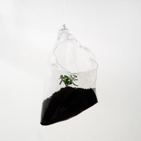 Mikala Dwyer 33, 2009; dirt, money plant; 65 x 47 x 33 cm; enquire