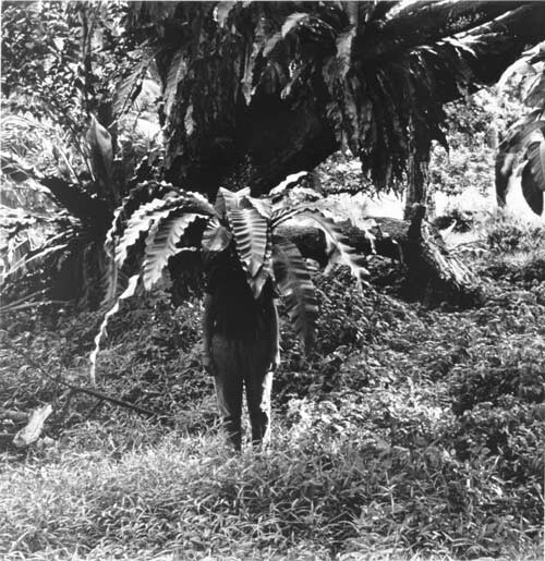 Simryn Gill #1 - large format, 1999; from the series Vegetation; Black and white photograph; 95 x 100 cm; 107.5 x 116 cm (paper size), Series of 5 images, Edition of 9; Edition of 9; enquire