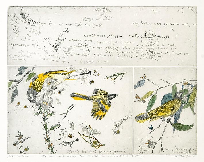John Wolseley Remembering the gold embroidered wings, 2005; hand coloured etching; 30 x 38cm (plate size); 57 x 57.5cm (paper size); Edition of 25; enquire