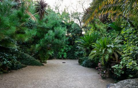 Bill Henson's Garden