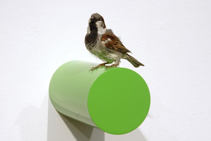 Michael Parekowhai Iver Johnson, 2004; sparrow, two pot paint, and aluminium; enquire