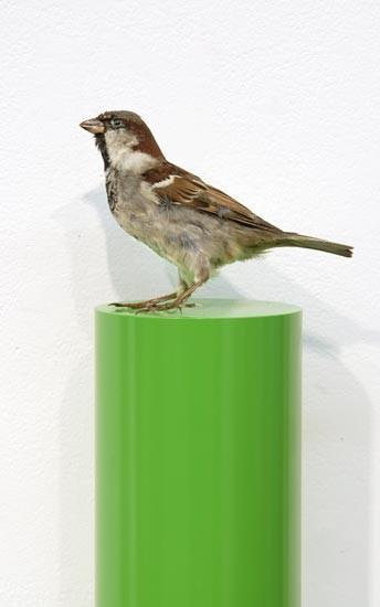 Michael Parekowhai Dave Douglas, 2004; sparrow, two pot paint, and aluminium; 78 x 13 x 10 cm; enquire