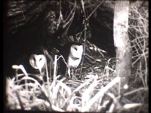 David Noonan Owl, 2004; DVD, from Super 8; Duration 2:56 minutes; Edition of 9; enquire