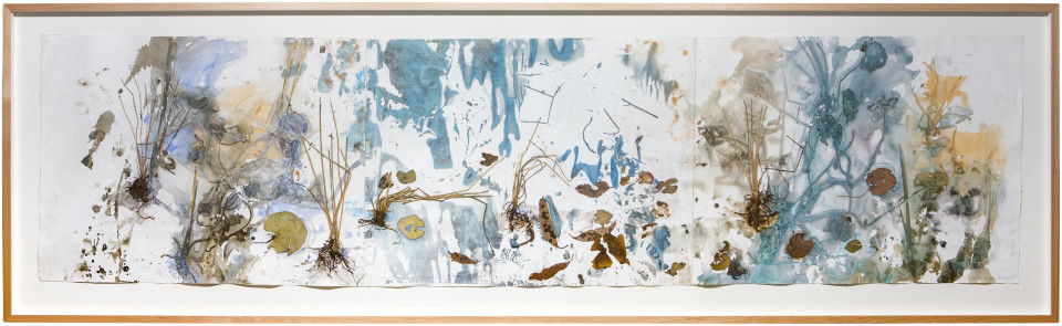 John Wolseley Eliacharis sedge and Nymphaea Lilies, 2015; watercolour and plants on paper; 97 x 320.5 cm; enquire