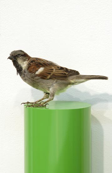 Michael Parekowhai J. D. Jones, 2004; sparrow, two pot paint, and aluminium; 78 x 13 x 10 cm; enquire