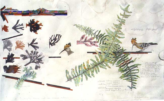 John Wolseley A history of ferns with hoopoe and hooded pitohui (detail), 2000; watercolour on paper; 46 x 147 cm; enquire