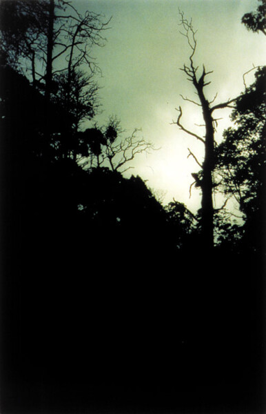 Bill Henson Untitled #113, 1998; CL SH 60 N24; Type C photograph; 104 x 154 cm; 127 x 180 cm (paper size); Edition of 5 + AP 2; enquire