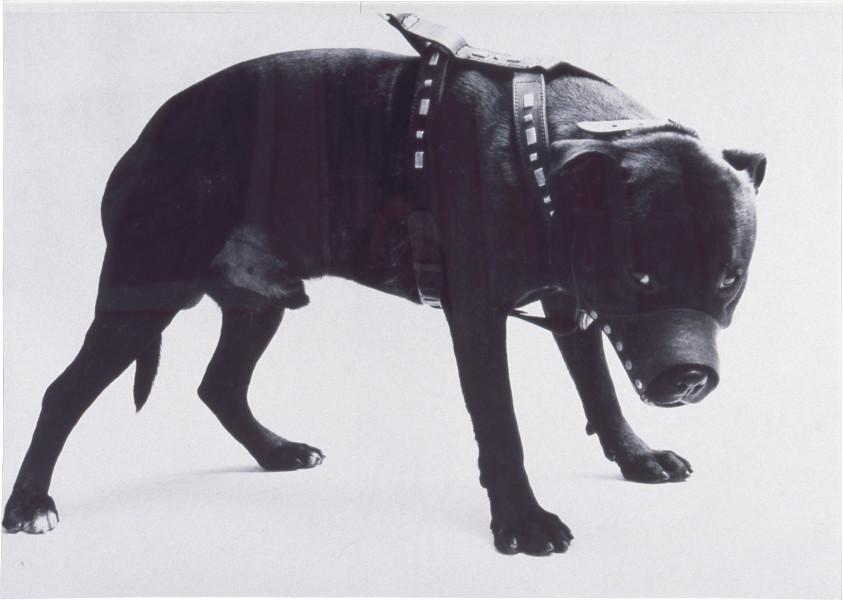 Abigail Lane For his own good, 1996; black & white photograph; 180 x 120 cm; Edition of 3; enquire