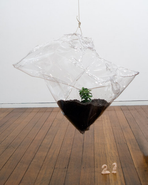 Mikala Dwyer 21, 2009; PETG, money plant, dirt; 58 x 70 x 36 cm; enquire