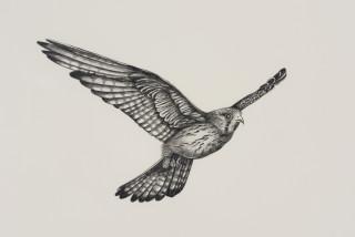 Patricia Piccinini Inseparable (Nankeen Kestrel) (detail), 2020; graphite on paper; 57 x 76 cm; 72.5 x 91 cm (framed); enquire