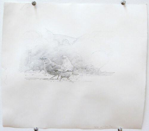 John Wolseley Two satin bower birds, 2000; pencil on paper; 28 x 31 cm; enquire