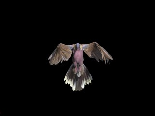 Mikala Dwyer and Gina Moore Pigeon (still), 2021; digital animation; Edition of 5; enquire
