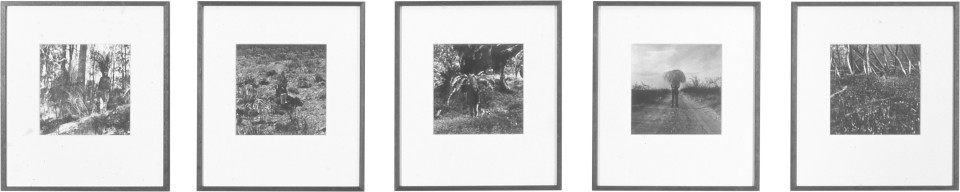 Simryn Gill Vegetation, 1999; black and white photographs; 26.67 x 26.67 cm; Edition of 10; enquire