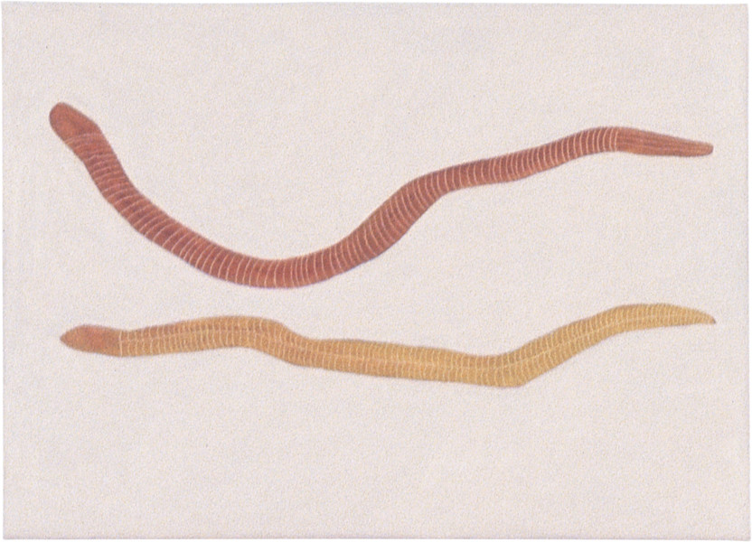 Fiona Foley Quandong Snakes, 1998; oil on canvas; 34.5 x 62.5 cm; enquire