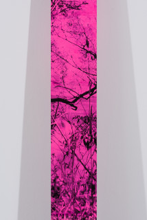 Gary Carsley Landscape Plank (Still Glides The Stream and Shall Forever Glide) (detail), 2020; Laser Print on 80gsm tinted paper (pink) applied to 19 mm thick dressed pine; 236 x 18.4 cm; enquire