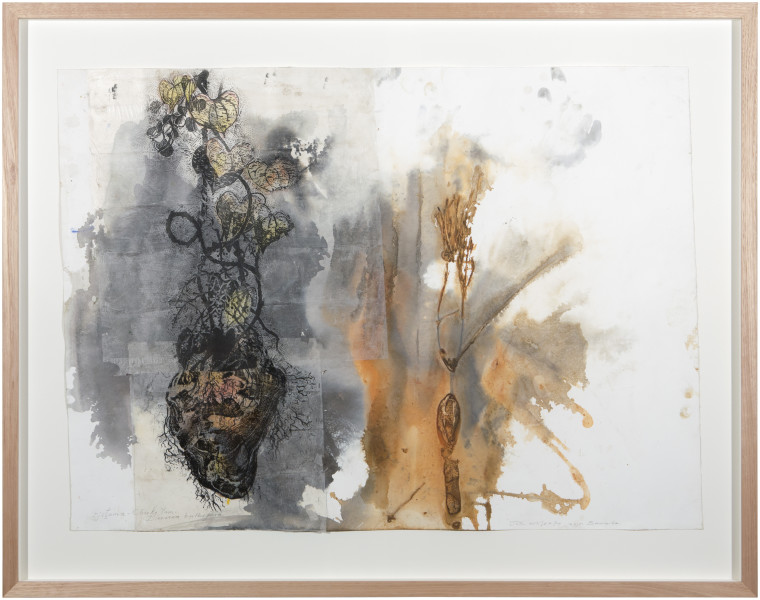 John Wolseley Djitama - Cheeky Yam and Unknown Tuber, 2015; watercolour with relief print; 93 x 118 cm; enquire