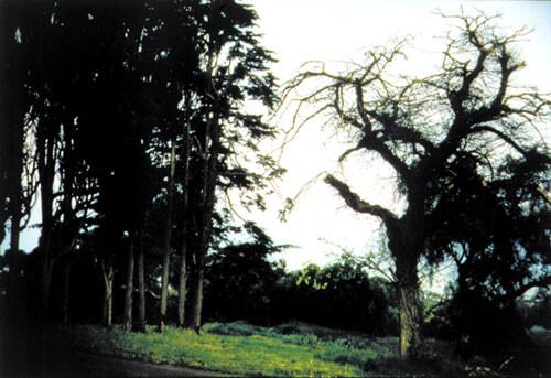 Bill Henson Untitled #100, 1998; CL SH 158 N27; Type C photograph; 104 x 154 cm; 127 x 180 cm (paper size); Edition of 5 + AP 2; enquire