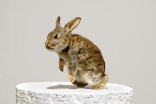Michael Parekowhai Driving Mr. Albert, 2005; rabbit, polyurethane, two-pot automotive paint; 165 x 25 x 25 cm; enquire