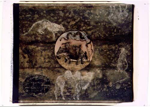 Fiona Hall Book VIII: Land Animals, 1991; Polaroid photograph; 53 x 68 cm; enquire