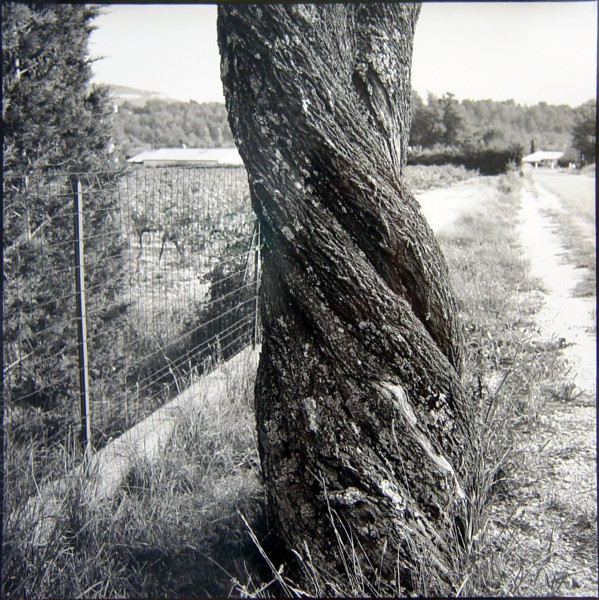 Bill Culbert Almond Tree, France, 2002; silver gelatin prints; 40.5 x 40.5 cm; Edition of 25; enquire