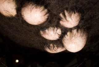 Patricia Piccinini Aloft (detail), 2010; Silicone, fibreglass, human hair, felted human hair, animatronic mechanisms, mixed media; enquire