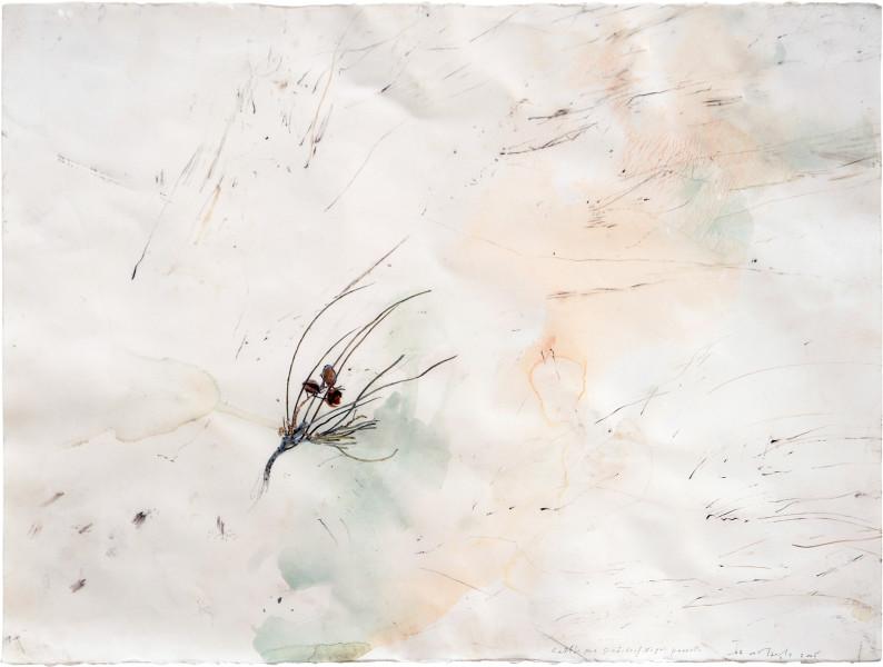John Wolseley Night Parrot/Rattlepod Grevillea, 2005; watercolour, graphite, carbonised wood on paper; 66 x 85.5 cm; (frame size); enquire