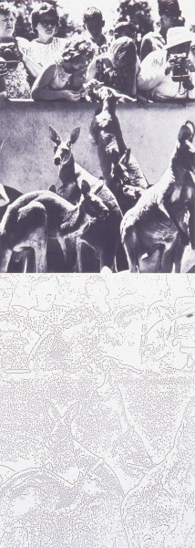 Ian Burn Systematically altered photograph: kangaroos, 1968; black and white photograph and photocopy on paper; 150 x 120 cm; enquire