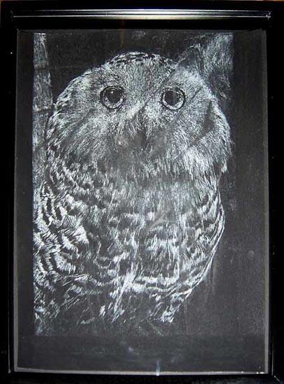 David Noonan Owl, 2003; gouache on paper; 40.5 x 30 cm; enquire
