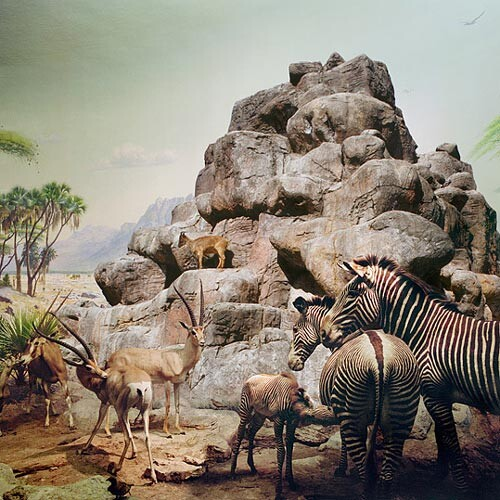 Anne Zahalka African Mammals and Himalayan Tarh, 2006; Ilfaflex Type C print; 80 x 80 cm; Edition of 10 + AP 2; enquire