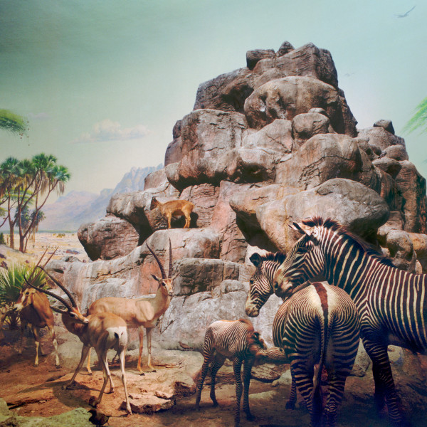Anne Zahalka African Mammals and Himalayan Tarh, 2006; Ilfaflex Type C print; 80 x 80 cm; Edition of 10 + AP 2; enquire