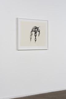 installation view; Patricia Piccinini Inseparable (Fairy Wren), 2020; graphite on paper; 57 x 76 cm; 72.5 x 91 cm (framed); enquire