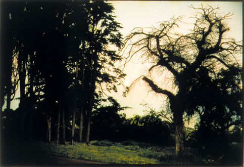 Bill Henson Untitled #81, 1998; CL SH 158 N27; Type C photograph; 104 x 154 cm; 127 x 180 cm (paper size); Edition of 5 + AP 2; enquire