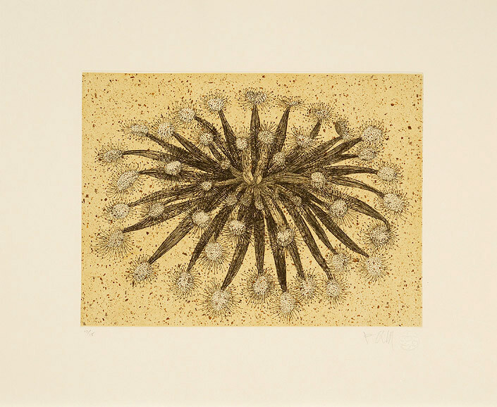 Fiona Hall Sundew, 2006; from the series Insectivorous; etching; 39.5 x 48 cm; Edition of 30; enquire