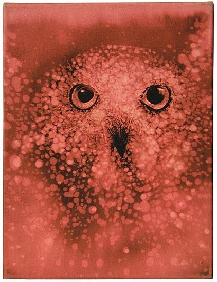 David Noonan Owl, 2003; bleach on cotton drill; 41 x 30.5 cm; enquire