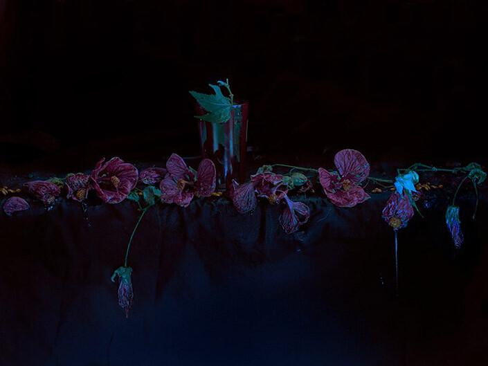 Fiona Pardington Chinese Lanterns and Striped Glass, McCahon, 2013; enquire