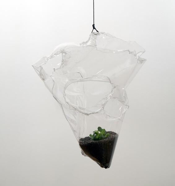 Mikala Dwyer Plant, 2009; dirt, money plant, PETG; 80 x 65 x 30 cm; enquire