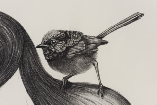 Patricia Piccinini Inseparable (Fairy Wren) (detail), 2020; graphite on paper; 57 x 76 cm; 72.5 x 91 cm (framed); enquire