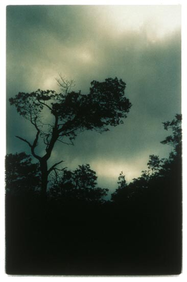 Bill Henson Untitled 1994/95, 1994-95; CL SH 60 N21; type C photograph; 180 x 127 cm; Edition of 5 + 2 APs; enquire