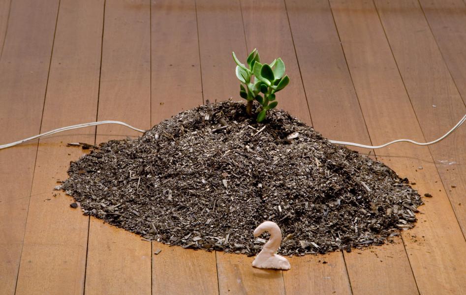 Mikala Dwyer 2, 2009; succulent, dirt; 55 x 55 x 25 cm; enquire