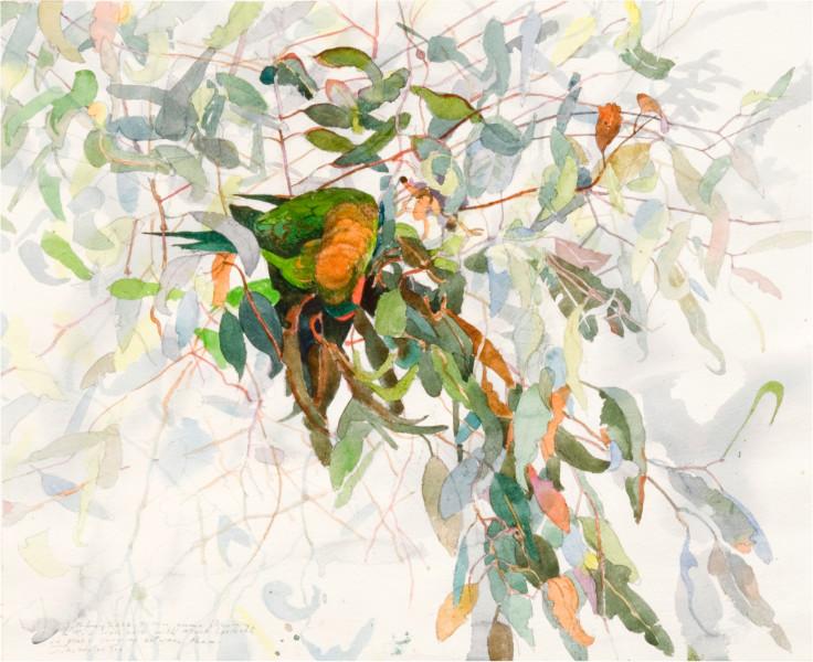 John Wolseley Musk Lorikeet 2 - Whipstick Forest, 2006; watercolour on paper; 69.5 x 79 cm; (frame size); enquire