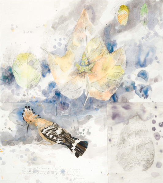 John Wolseley Monsoon Hoopoe - Taman Negara, 2000-06; watercolour, graphite on paper; 92 x 83.5 cm; (frame size); enquire