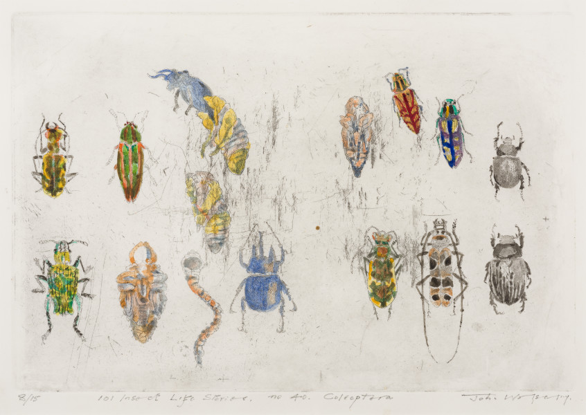 John Wolseley 101 Insect Life Stories No 40. Coleoptera, 2017; etching with watercolour; 30 x 40.5 cm; Edition of 15; enquire