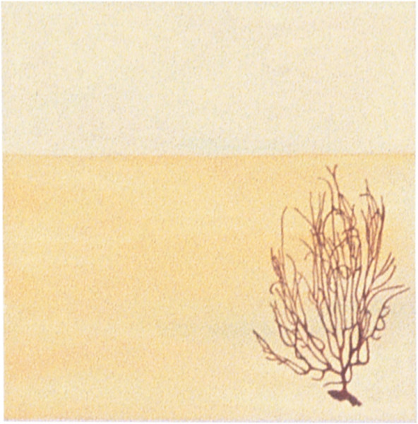 Fiona Foley Black Coral, 1998; oil on canvas; 38.5 x 38.5 cm; enquire