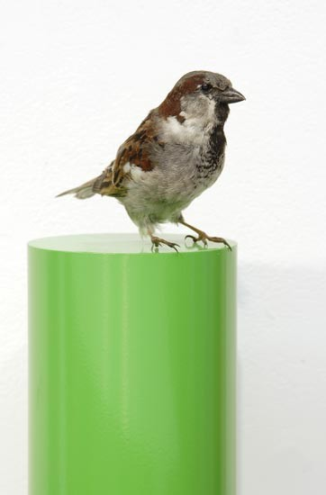 Michael Parekowhai Alex Hamilton, 2004; sparrow, two pot paint, and aluminium; 78 x 13 x 10 cm; enquire